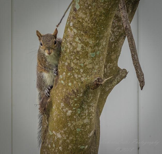 Squirrel   (am workf)   2018-03-10-3100002