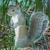 2018-12-08_300 mono_squirrel_8