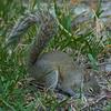 2018-12-08_300 mono_squirrel_2