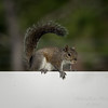 Squirrel    (am hdr1)   2018-02-26-2260019