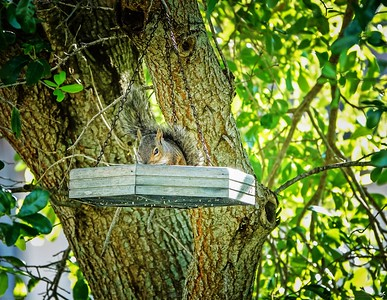 003_squirrel_20210508 2