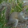 2018-12-08_300 mono_squirrel_4