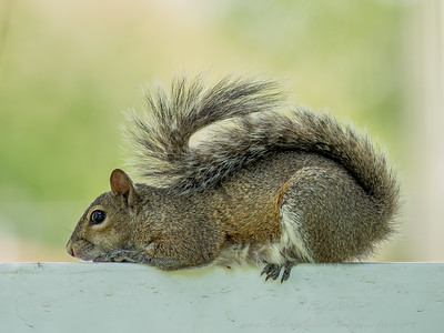 2019-02-20  3001 4 iso200  yester bright-10 squirrel_- (10 of 12)