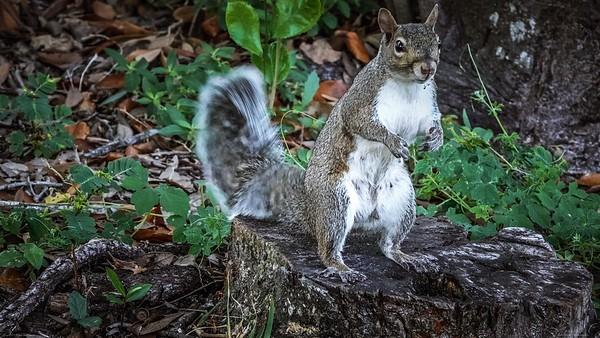 2021-09-06 Local Squirrels