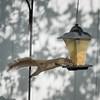 Squirrel    (am hdr1)   2018-02-26-2260024