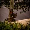Squirrel  (EPwild)   2010-1080933