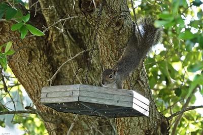 004_squirrel_20210517