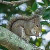 2018-12-08_300 BB frames_squirrel