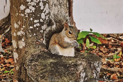 _001_squirell_04052021