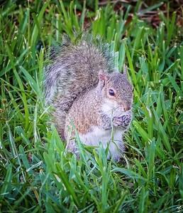 001_squirrel_20210508