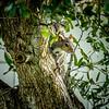 2018-10-18_PA180002_local squirrel