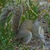 2018-12-08_300 mono_squirrel_5