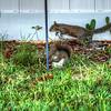 squirrel   (photo cool sum day)   2018-03-05--3