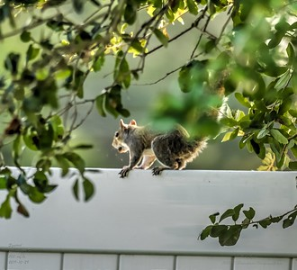_A290197_ squirrel_   vibrant,nr150
