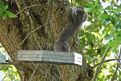005_squirrel_20210517