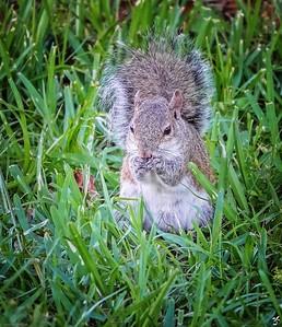 002_squirrel_20210508