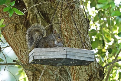 009_squirrel_20210517