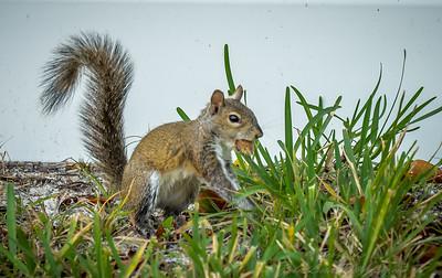2019-01-13_300,ap,,raw,  squirrel_P1130018