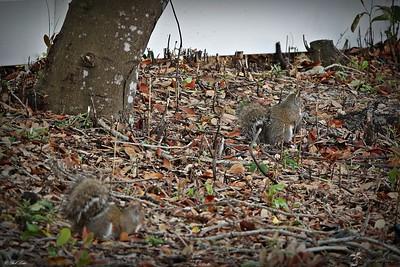 _004_squirrels_03082021