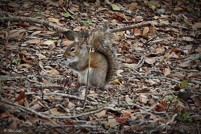 _006_squirrels_03082021