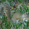 2018-12-08_300 mono_squirrel_7