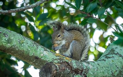 2019-01-13_300,ap,,raw,  squirrel_P1130043