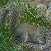2018-12-08_300 mono_squirrel_3