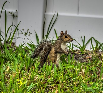 _A290185_ squirrel_   vibrant,nr150
