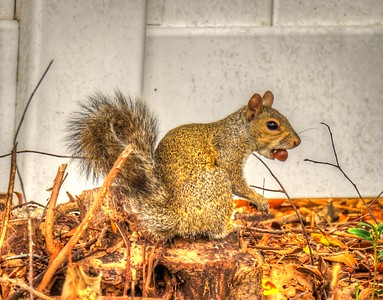 _B080014_ squirrel_ tonywarm,nr150