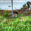 squirrel   (photo cool sum day)   2018-03-05--2