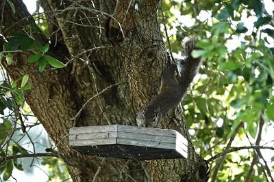 002_squirrel_20210517