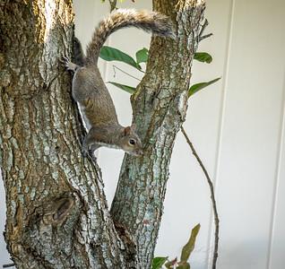 2019-01-13_300,ap,,raw,  squirrel_P1130001