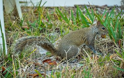 2019-01-13_300,ap,,raw,  squirrel_P1130016