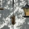 Squirrel    (am hdr1)   2018-02-26-2260021