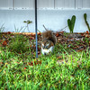 squirrel   (photo cool sum day)   2018-03-05-
