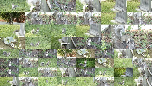 2021-09-06 0815 rx ap squirrels