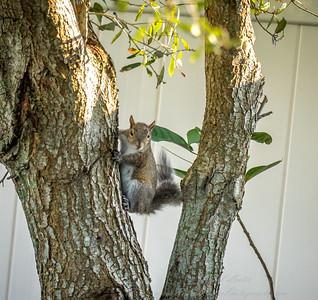 2019-01-13_300,ap,,raw,  squirrel_P1130002