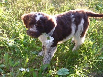 Romeo at nine weeks