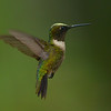 Ruby-throated Hummingbird, male.  The yellow on the top of his head is pollen.