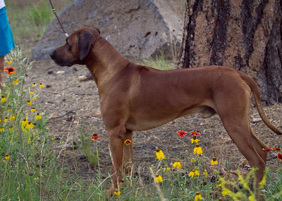 K. Russel Dog