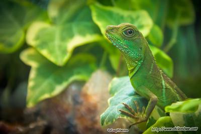 SAcramento Reptile expo 2010