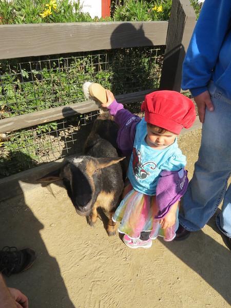 Edea at the petting zoo