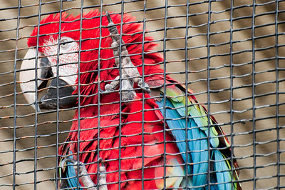 Macaw with all its lovely colors.