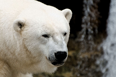 Artistically rendered polar bear with water fall in the background.