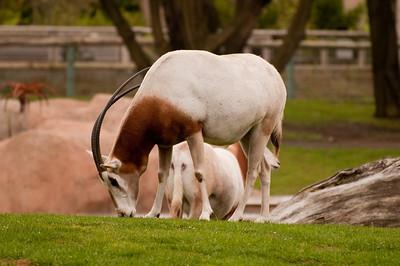 Long horns and green grass.