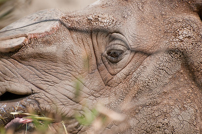 The eye of the Rhino.