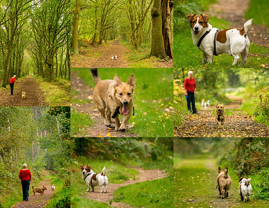 SHERWOOD FOREST DOG WALK (2)