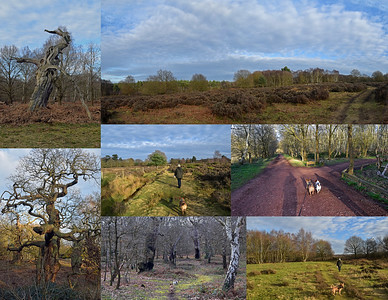 SHERWOOD FOREST DOG WALK