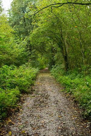 SKELLINGTHORPE OLD WOOD DOG WALK (3)
