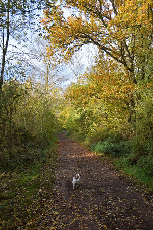 SKELLINGTHORPE OLD WOOD DOG WALK (2)